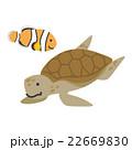 ウミガメとクマノミ【沖縄・シリーズ】 22669830