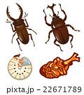 カブトムシとクワガタムシのセット 22671789