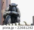 チンパンジー 22681292