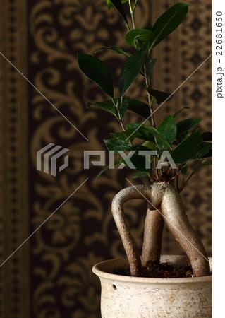 観葉植物の写真素材 [22681650] - PIXTA