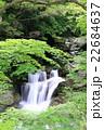 清流の楓 22684637