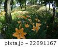 咲き誇る花々 22691167