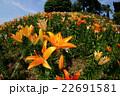 咲き誇る花々 22691581