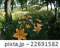 咲き誇る花々 22691582