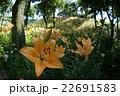 咲き誇る花々 22691583