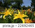 咲き誇る花々 22692465
