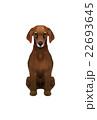 動物 犬 ダックスフンドのイラスト 22693645