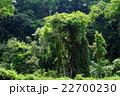 緑に覆われた古木 22700230