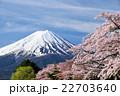 富士山 桜 染井吉野の写真 22703640