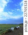 晴れの畑 22705328