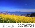 桃源郷の春 22705724