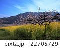 桃源郷の春 22705729