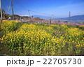 桃源郷の春 22705730