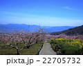 桃源郷の春 22705732