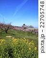 桃源郷の春 22705748