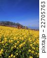桃源郷の春 22705763