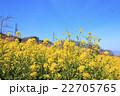 桃源郷の春 22705765