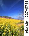 桃源郷の春 22705766