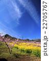 桃源郷の春 22705767