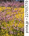 桃源郷の春 22705770