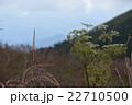 三瓶山に咲く山草 22710500