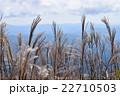 三瓶山の山頂に咲くすすき 22710503