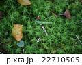 三瓶山に咲く山草 22710505