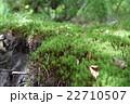 三瓶山に咲く山草 22710507