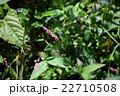 三瓶山に咲く山花 22710508