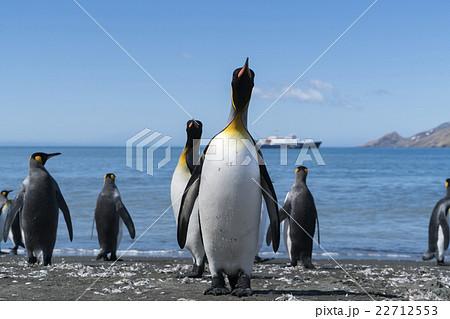 海から帰ってきたキングペンギン 22712553