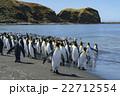オウサマペンギン キングペンギン ペンギンの写真 22712554