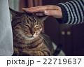 飼い主 猫 飼い猫の写真 22719637