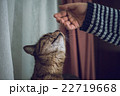 猫 嗅ぐ 飼い猫の写真 22719668