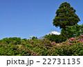 富士山とツツジ 22731135