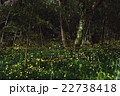 姫蛍 蛍 夜の写真 22738418
