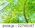 森林の朝 22740187