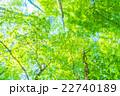 森林の朝 22740189