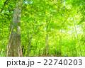 森林の朝 22740203