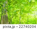 森林の朝 22740204