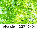新緑エコイメージ 22740404