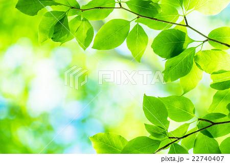 新緑エコイメージ 22740407