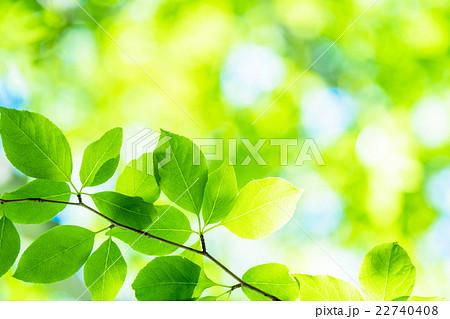 新緑エコイメージ 22740408