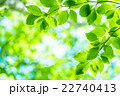 新緑エコイメージ 22740413