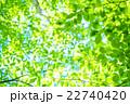 新緑 初夏 若葉の写真 22740420