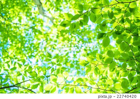 新緑エコイメージ 22740420