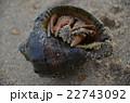 ヤドカリ 22743092