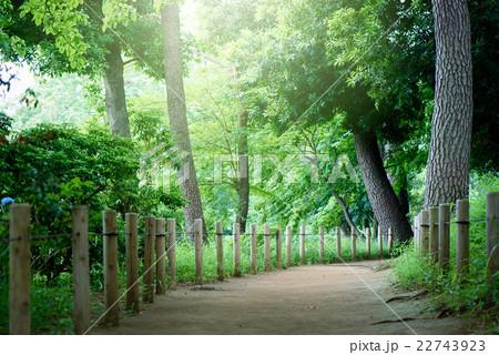 休日の散歩道 22743923