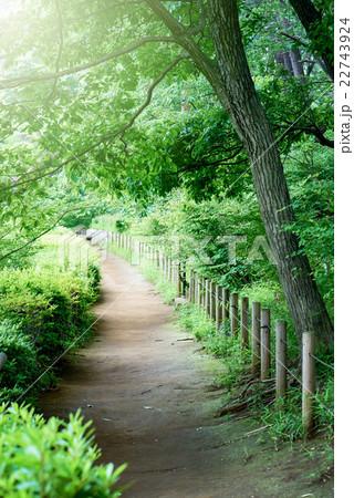 休日の散歩道 22743924