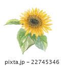 向日葵 花 植物のイラスト 22745346