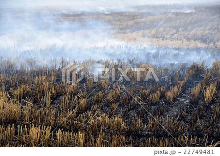 麦の収穫後の野焼き 22749481